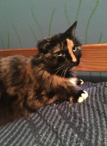 Clear Creek Cat Rescue | Southcentral Alaska